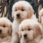 ¿Por qué las mascotas ayudan a aumentar la autoestima de los niños?