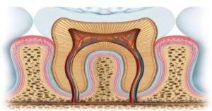 Todo lo que debes saber sobre las partes de los dientes